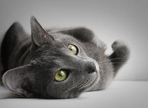 Кошачья история