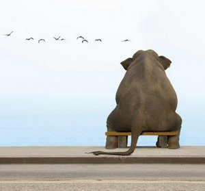 kak-ne-sdelat-iz-muhi-slona