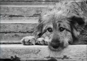 Проблема бездомных животных в Новосибирске